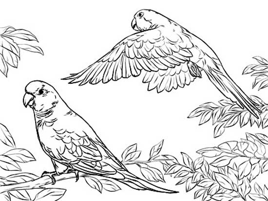Family Coloring Pages Parrot